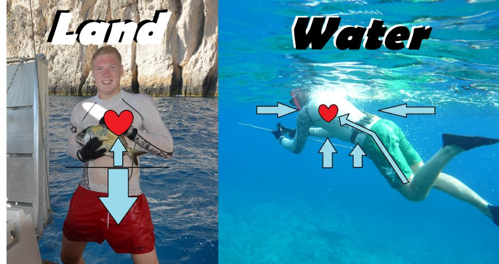 Diver diuresis nurtrition diet physiology diving pee urinate urine urge alcohol